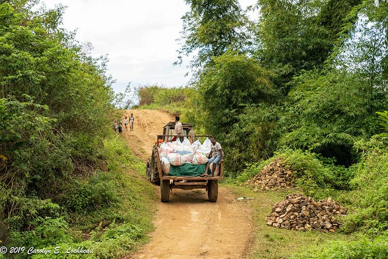 Madagascar Vanilla Bean Harvest 2019
