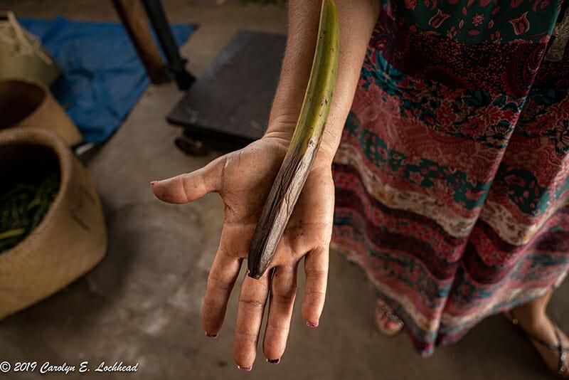 Madagascar Vanilla Beans